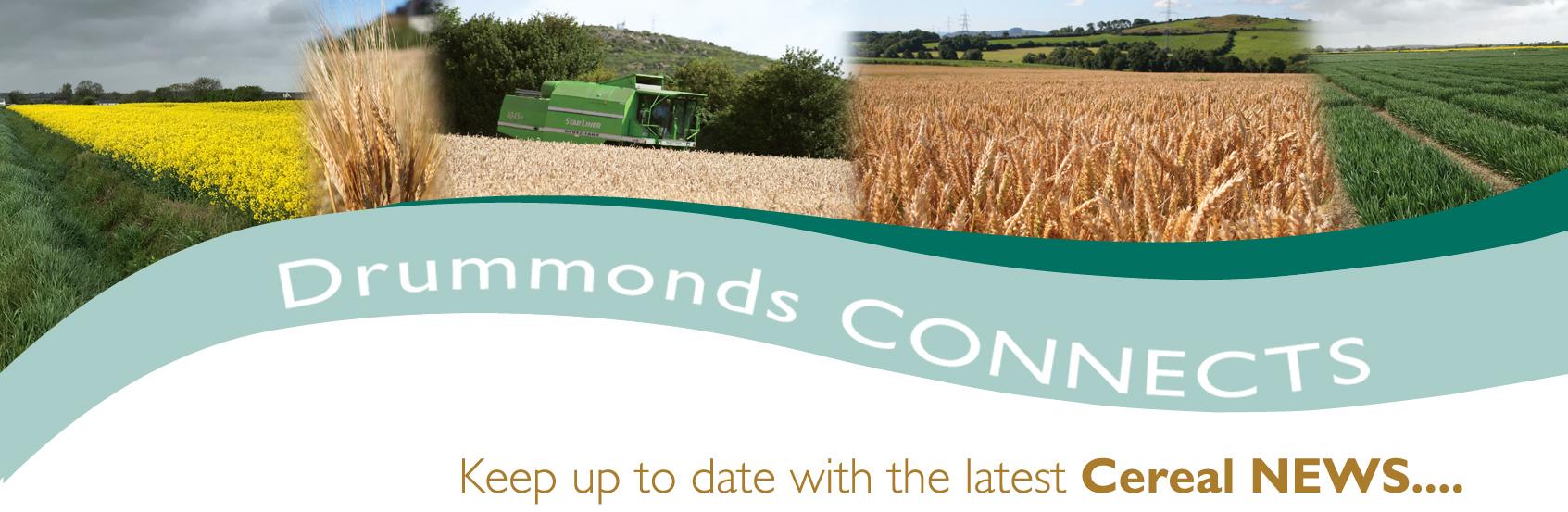Newsletter Header - Grain